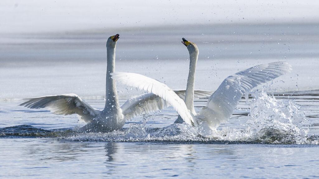 Villien ja vapaiden sulokas tanssiinkutsu luontoihmisille -   solahda sinäkin toukokuun ihanaan keväthuumaan!